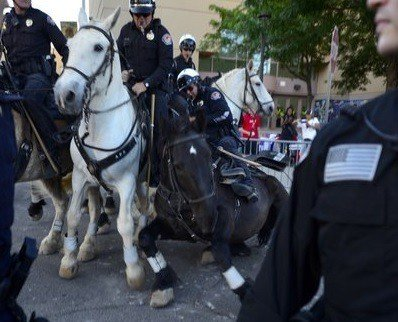 police-horse-knocked-down