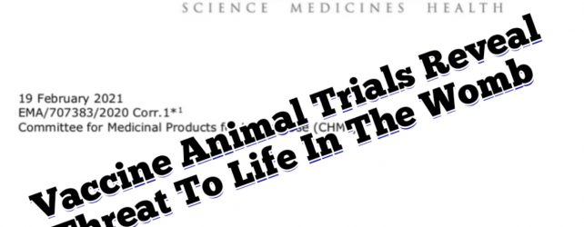 Vaccine Animal Trials Reveal Threat To Life In The Womb